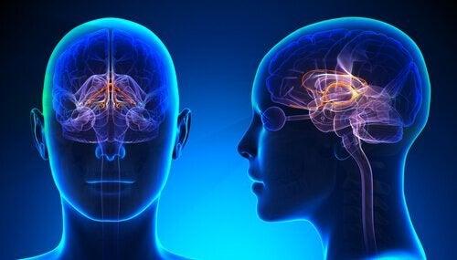 aivot ja silmät