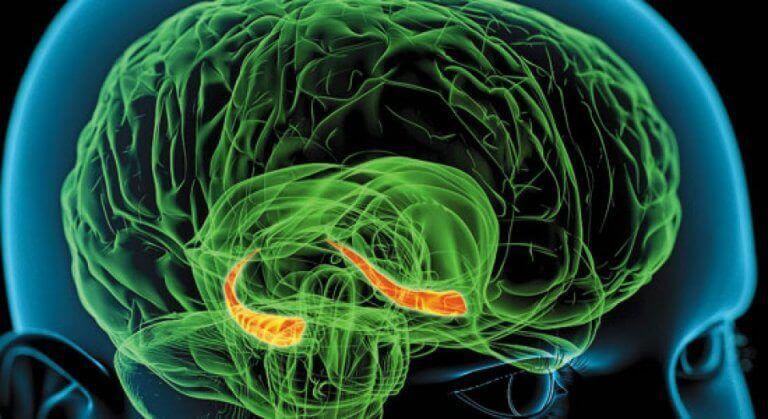 aivojen värit