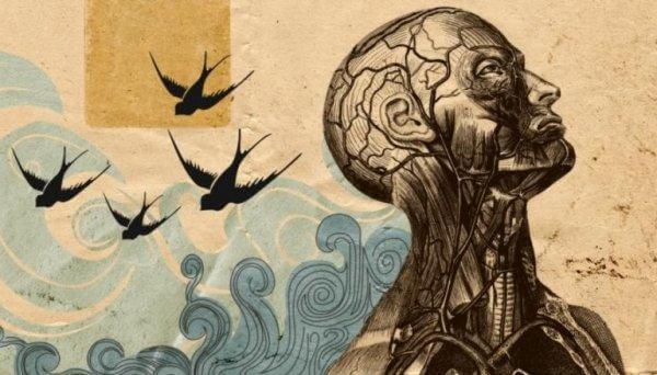 pää ja aallot ja linnut