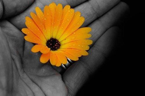 värillinen kukka mustavalkoisessa kädessä