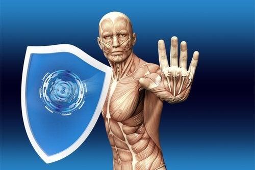 Kuinka ihmisen immuunijärjestelmä toimii?