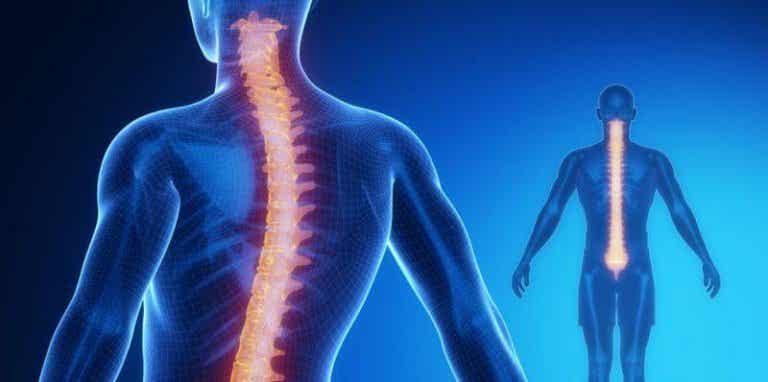 Selkäydin: anatomia ja fysiologia