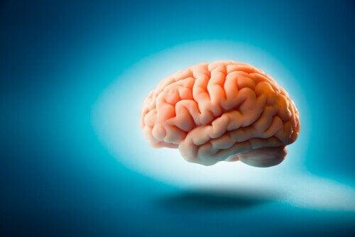 Aivot ja ruokavalio: terveet aivot