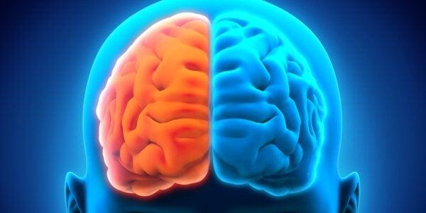 neurologisia häiriöitä aivopuoliskojen välillä