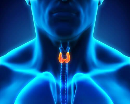 hormonityypit: kilpirauhasen tuottamat
