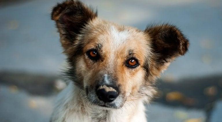 Utelias koiranpentu: kaunis tarina itsetutkiskelusta