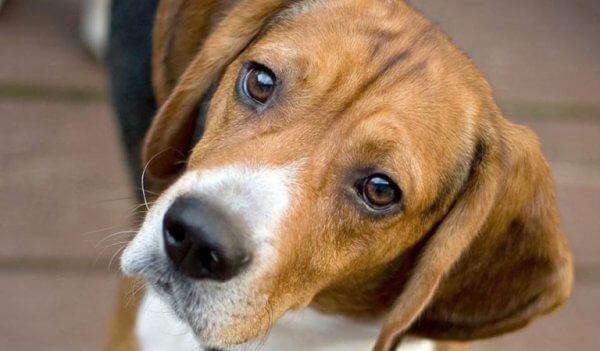 koira ja tarina itsetutkiskelusta