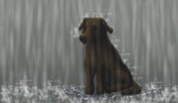 koira sateessa