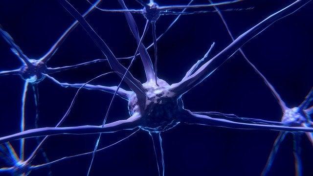 Neuronit: mitä ne ovat ja kuinka ne toimivat