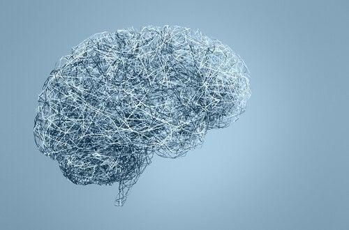 neuroseksismi: miesten ja naisten aivojen väliset erot