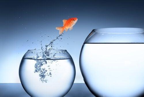 rohkeus: kala hyppää toiseen astiaan
