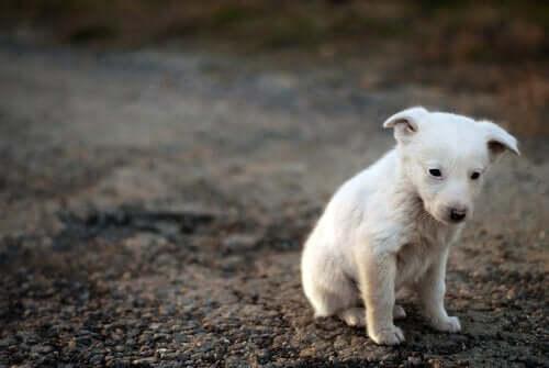 Eläinten tietoisuus: ovatko ne tietoisia kärsimyksestään?