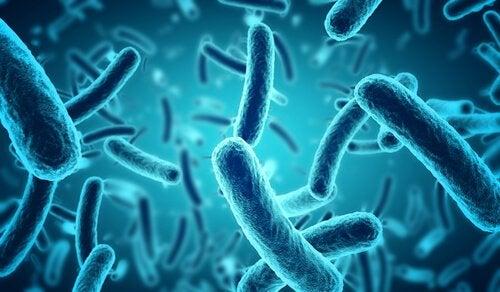bakteerit