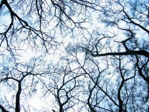 Dendriitit: neurotieteen vallankumouksen alku