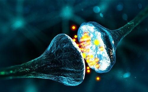 synapsit: kuin magneetit