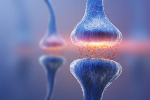 Synapsit ja hermosolujen välinen kommunikointi