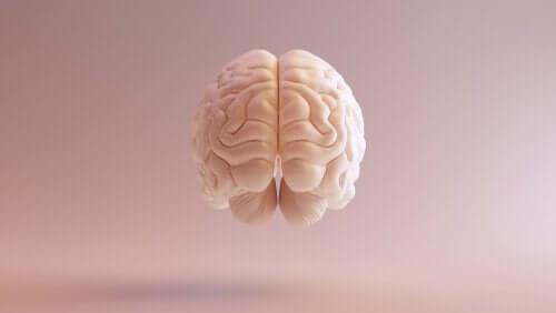 Neurotiede tutkii aivoja