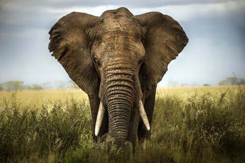 Kuusi viisasta sokeaa ja elefantti: tarina, joka opettaa arvostamaan toisten mielipiteitä