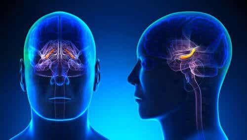 Hippocampalin rakenne ja toiminnot