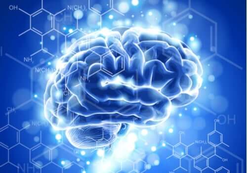 Neuroetiikan kehitys ja piirteet