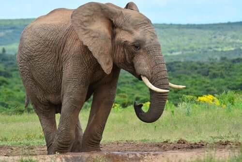 Kuusi viisasta sokeaa ja elefantti on opettavainen tarina siitä, miten toisten mielipiteitä tulisi myös arvostaa