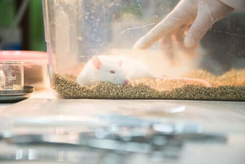 Rat Parkin kokeilussa tutkimusryhmä jakoi rotat kahteen eri ryhmään; häkissä eläviin ja vapaudessa eläviin rottiin