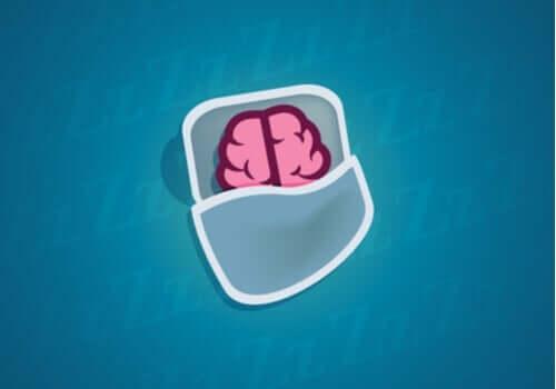 Mitä neuroneille tapahtuu unen aikana?
