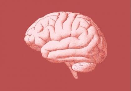 Aivot osana kielen psykologiaa