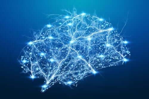 Aivoissa on hienostuneita hermosolukytköksiä