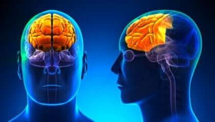 Dyseksekutiivinen oireyhtymä vaikuttaa eniten käytökseen