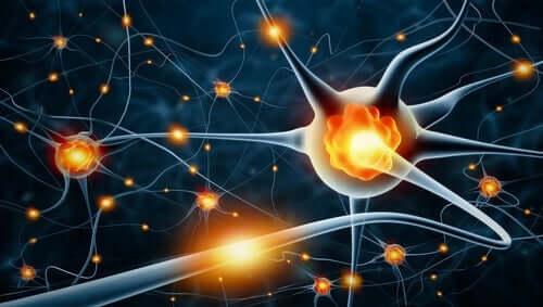 Aivojen plastisuus pitää mielen nuorena.
