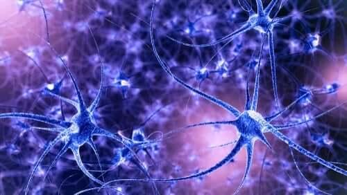 Aivojen plastisuus: ominaisuudet ja tyypit