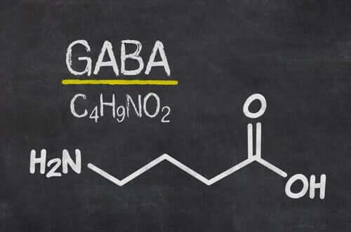 Lateraalisen habenulan asianmukainen toiminta riippuu pääasiassa glutamaatin ja GABA:n tasapainoisesta vapautumisesta