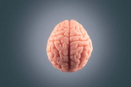 Vaaleanpunaiset aivot