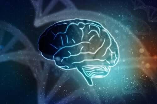 Eristetyt aivot - elo ilman kehoa
