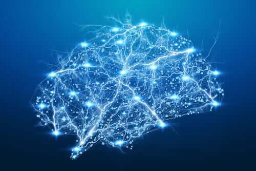 Aivokuori ja etenkin sen frontaaliset alueet ohjaavat ajatustemme kognitiivisia ja refleksiivisempiä prosesseja