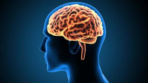 Victor Leborgnen tapaus neurotieteessä
