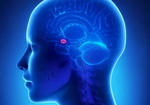 Tutkimukset ovat osoittaneet, että tietyt aivojen alueet ja erityisesti mantelitumake lisäävät ahdistuneisuushäiriöiden riskiä aikuisiässä