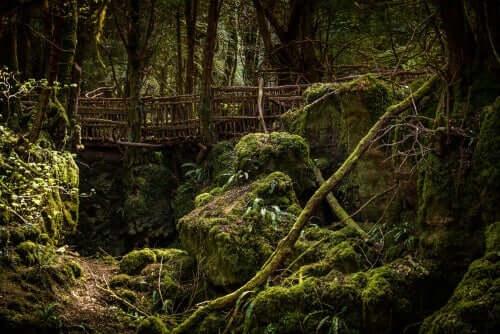 Sammaloitunut metsä