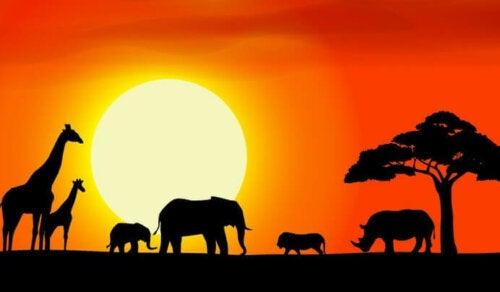 Afrikkalaiset sanalaskut ovat kulkeutuneet vuosisatojen ajan heimolta toiselle ja kulttuurilta toiselle