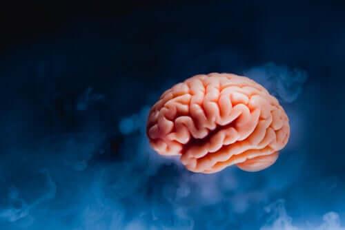 Oikeakätisille ihmisille suunnattu yhteiskunta on tuonut mukanaan mukautumisen tarpeen niille ihmisille, joilla vasemmalla aivopuoliskolla on hallitseva asema