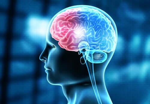 Gerstmannin oireyhtymä on harvinainen neurologinen sairaus, joka saa alkunsa päälakilohkoon kohdistuneesta vammasta