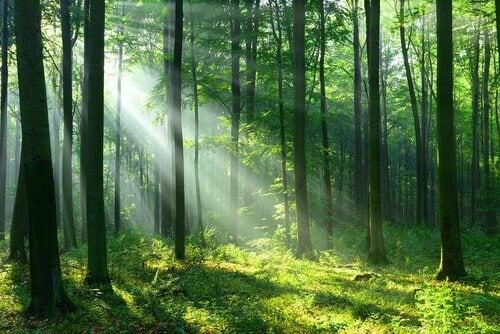 Luonnon puhdistava vaikutus ihmisiin auttaa säätelemään sekä fyysistä että henkistä hyvinvointia
