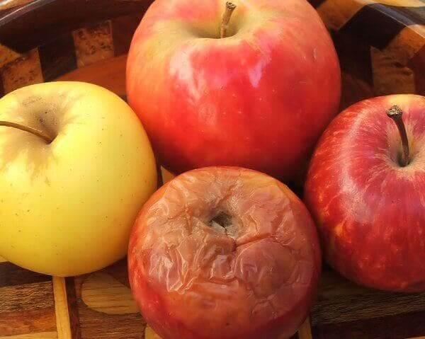 Mädän omenan teoria pätee monella työpaikalla.