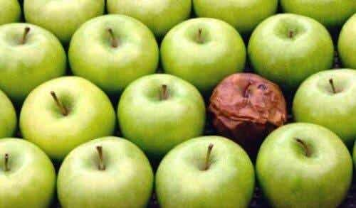 Mädän omenan teoria työpaikalla