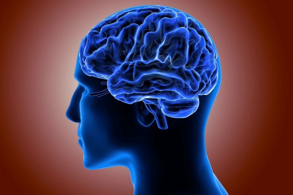 Aivokuoren tehtävänä on peittää molempien aivopuoliskojen pinnat