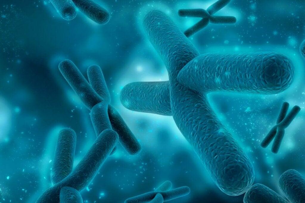 Pakygyria johtuu sikiön hermojen siirtymäprosessin keskeytymisestä, joka voi johtua ympäristövaikutuksista tai geneettisistä muutoksista