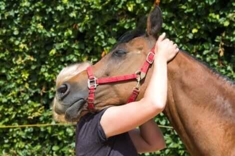 Hevosavusteinen terapia soveltuu ihmisille, joilla on jokin fyysinen tai psyykkinen vamma