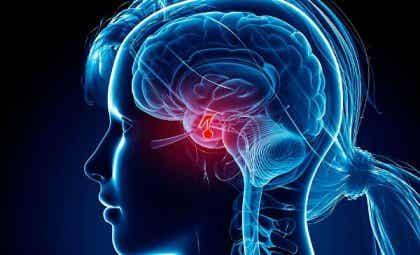 Asetyylikoliini vaikuttaa aivolisäkkeen toimintaan.