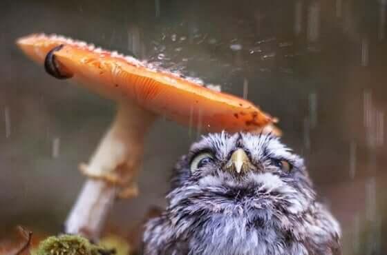 Sateen ääni on omiaan rauhoittamaan.